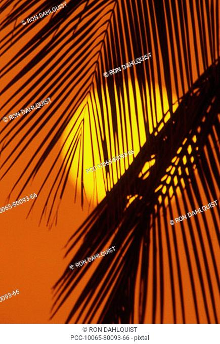 Sunball shining through palm fronds in orange sunset sky