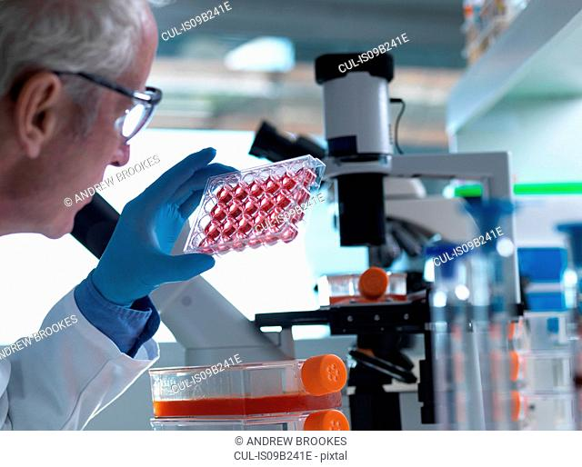 Scientist holding a multiwell plate containing growth medium commonly used in biological research to maintain and grow cells