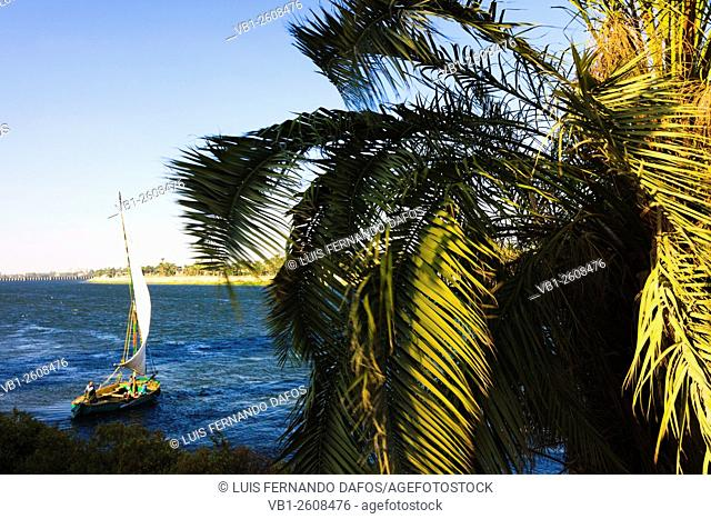 Palm tree and traditional felucca boat over the Nile in Asyut, Egypt