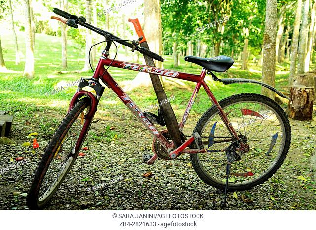 Bicycle of a worker, Comalcalco Precolumbian Maya Archaeological Site, Tabasco, Mexico, America