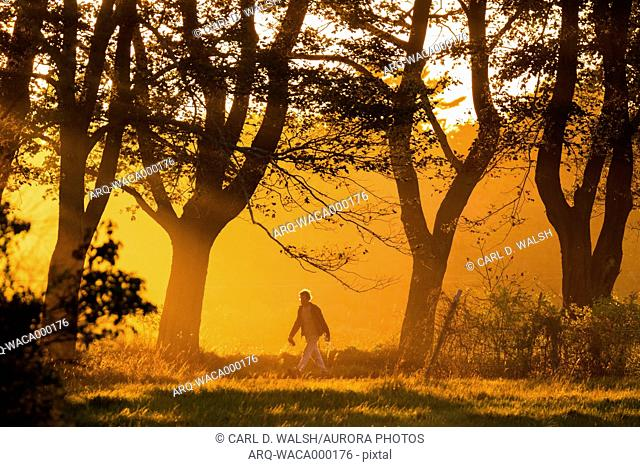 Lone man walking in natural scenery with trees at sunset along Parsons Beach Road, Kennebunk, Maine, USA