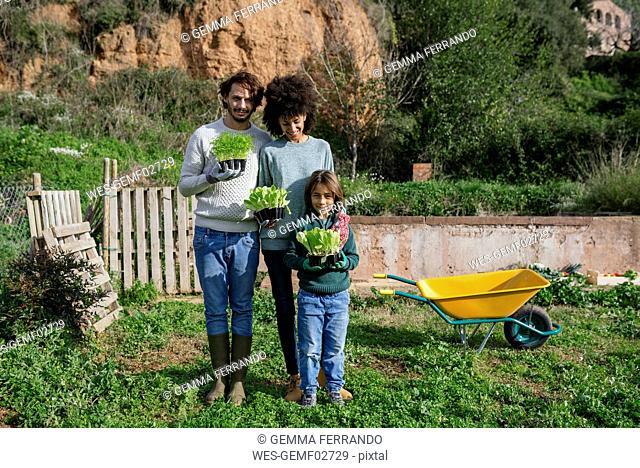 Happy family holding lettuce seedlings in a vegetable garden
