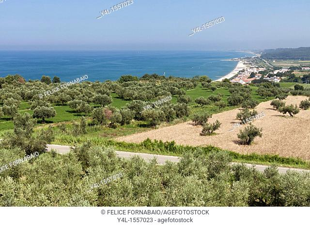 Landscape with Olive Trees and Sea, Abruzzo, Italy
