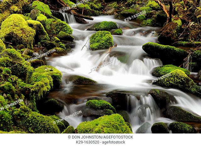 Waterfalls and mossy cascades in a stream along the trail to Sol Duc Falls, Olympic NP Sol Duc unit, Washington, USA