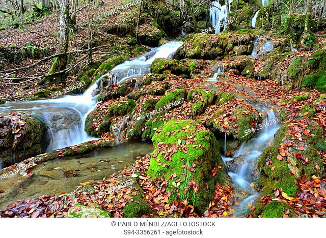 Toberia waterfall in a beech wood of Andoin, Alava, Spain