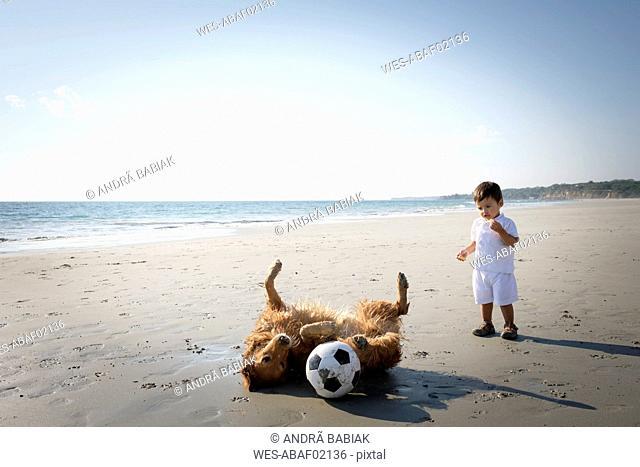 Little boy watching dog rolling around on the sandy beach