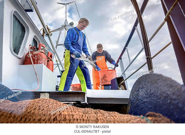 Fishermen with catch of fish on deck of trawler