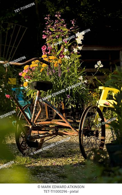 Antique tricycle carrying fresh flowers