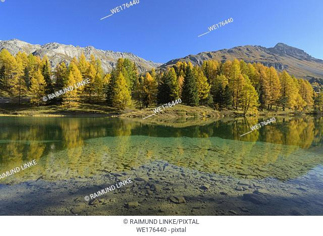 Mountain lake with larch trees in autumn, Preda, Lake Palquognasee, Lai da Palquogna, Albula-Pass, Grisons, Switzerland, European Alps