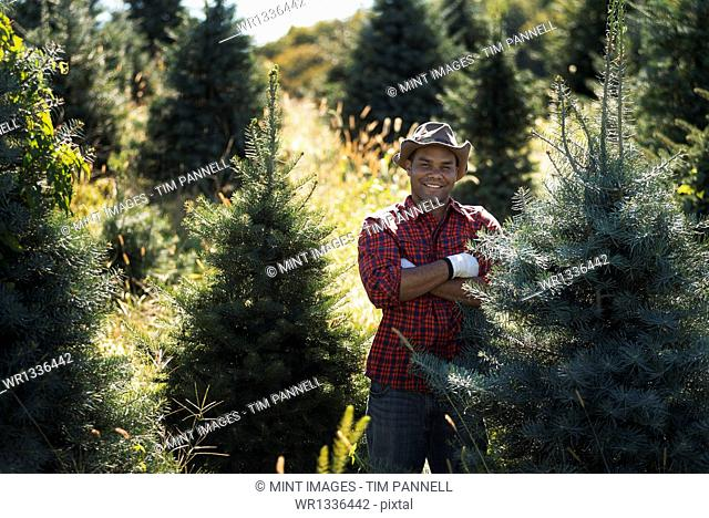 A man wearing a checked shirt and large brimmed hat in a plantation of organic Christmas trees