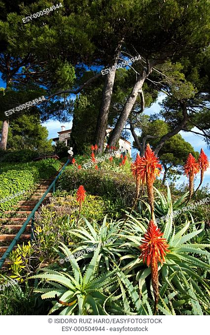 Aloes en flor i paissatge de costa a l'Escalinata de Mar  Jardins noucentistes de Santa Clotilde  Lloret de Mar Costa Brava  Girona  Catalunya  España