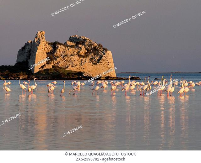 Group of flamingoes (Phoenicopterus roseus) and St. John's Tower ruins at Alfacs Bay during sunset. Ebro River Delta Natural Park, Tarragona province, Catalonia