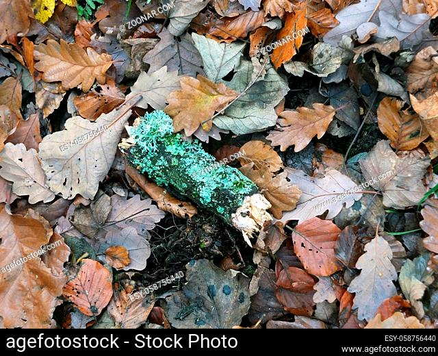 dead brown autumn leaves wet with raindrops and a moss covered green twig on a forest floor