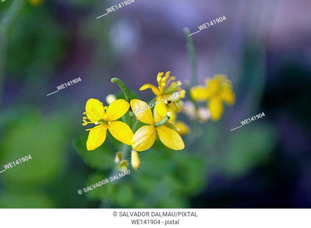 macro photography, wildflowers, creative, Location lands Porqueres, Girona, Catalonia, Spain, Europe