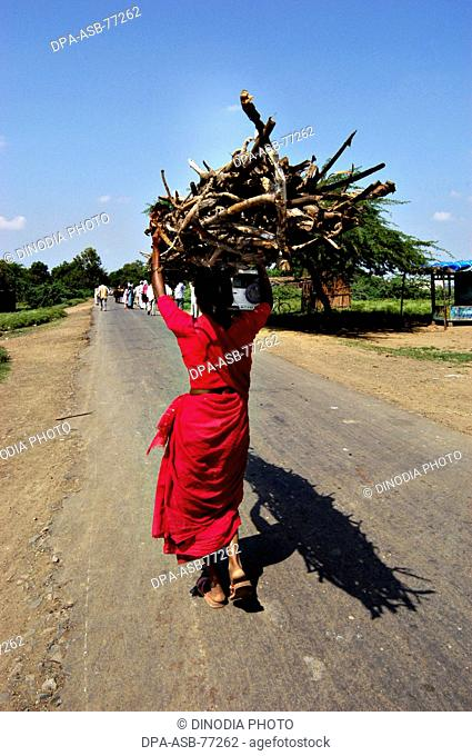 Indian rural village woman carrying dry braches of broken tree on her head to be used as fuel for cooking ; at Nanded ; Maharashtra ; India