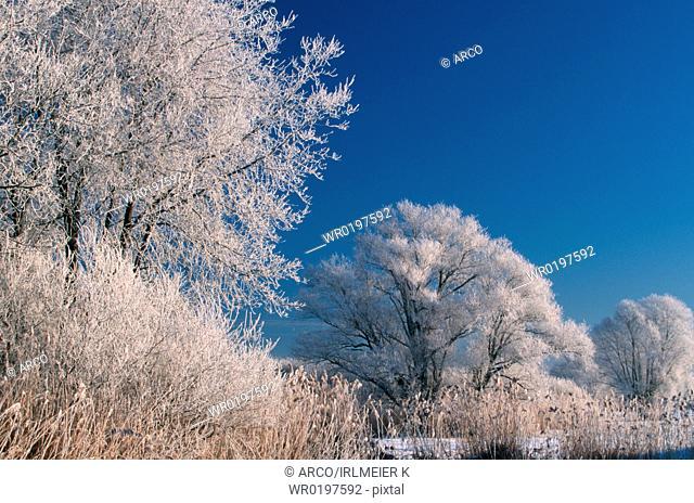 Hoarfrost, covered, Trees, Bavaria, Germany