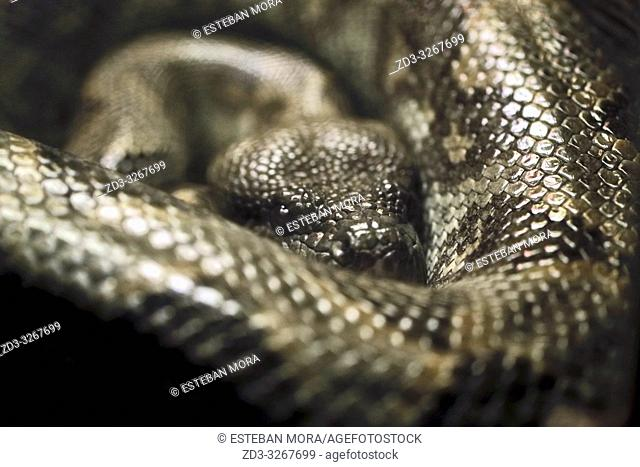 Snake looking at camera