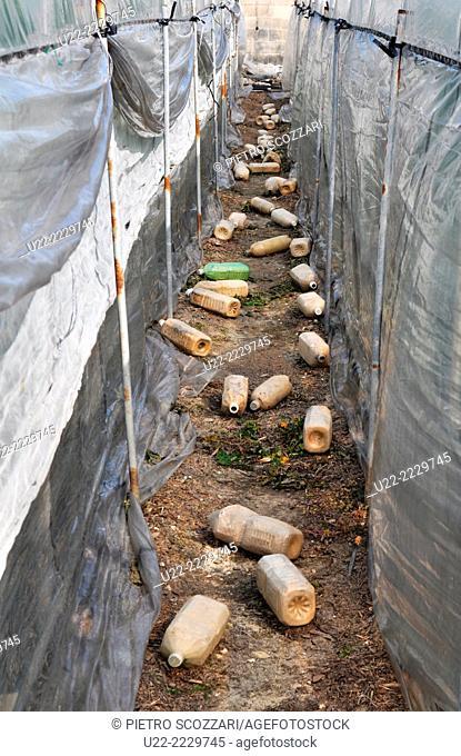 Kitanashiro, Okinawa, Japan: plastic bottles between two greenhouses
