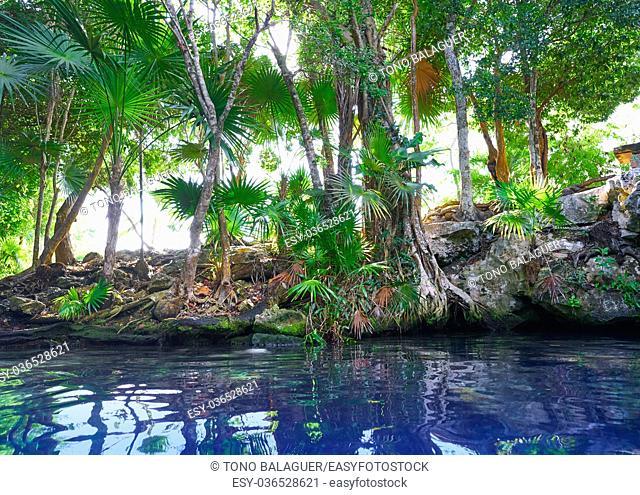 Cenote sinkhole in Riviera Maya at Mayan Mexico