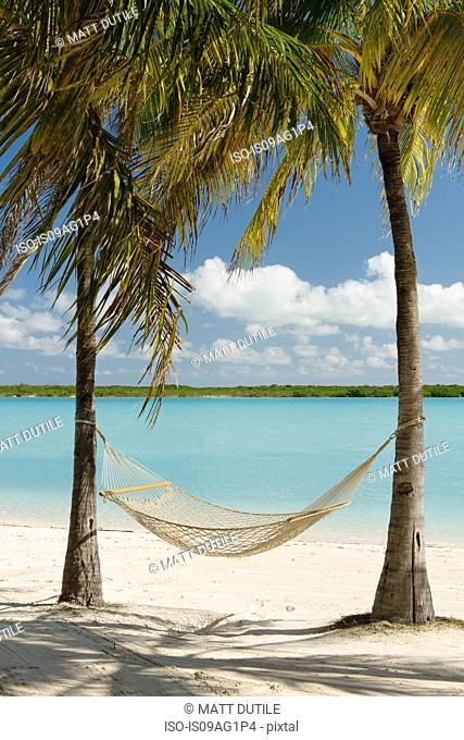 Hammock between palm trees, Providenciales, Turks and Caicos Islands, Caribbean