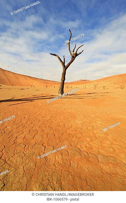 Dead Vlei in the Namib Desert with dead Camel Thorn Tree (Acacia eriloba), Namibia, Africa