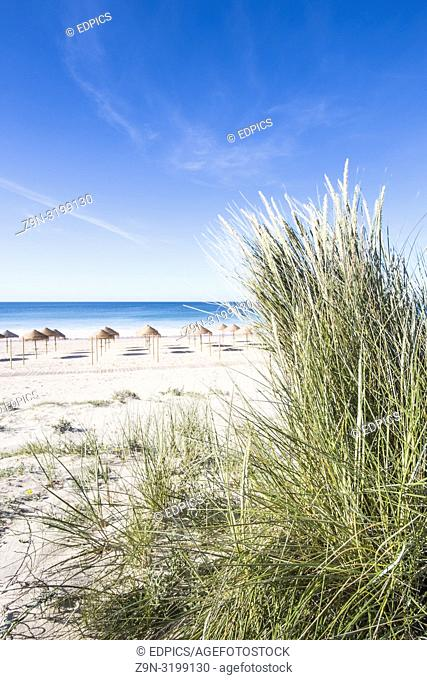 palm leaf beach umbrellas on a deserted beach seen from a dune, alvor, algarve, portugal