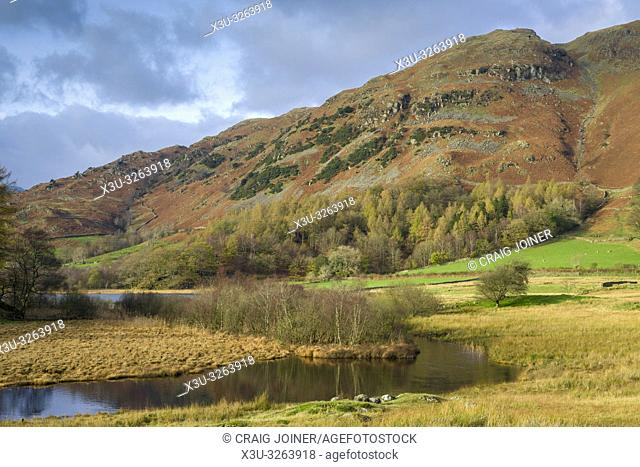 Autumnal view of the River Brathay and Lingmoor Fell in the Lake District National Park, Cumbria, England