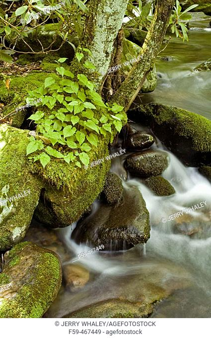Roaring Fork, Great Smoky Mtns NP, Tennessee , USA