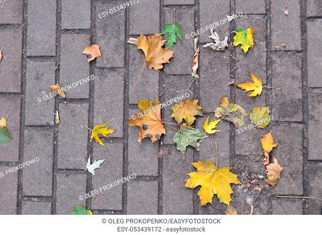 Texture of autumn leaves of different colors closeup