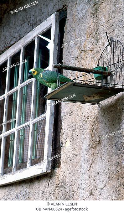 Parrot, animals