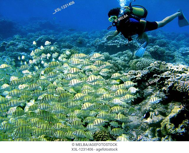 Coral Ref  Bora Bora Island Sociedad Islands French Polynesian