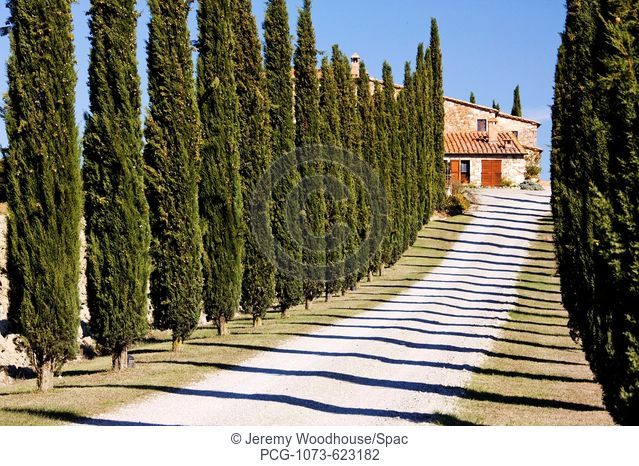 Gravel Road Lined with Cypress Trees