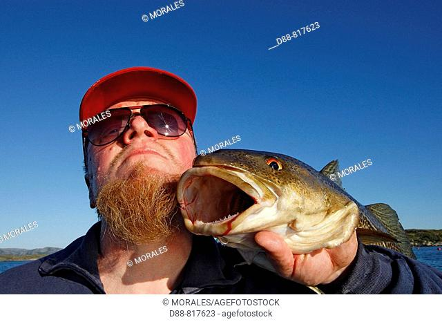 Man showing Atlantic Cod (Gadus morhua). Flatanger area, Norway