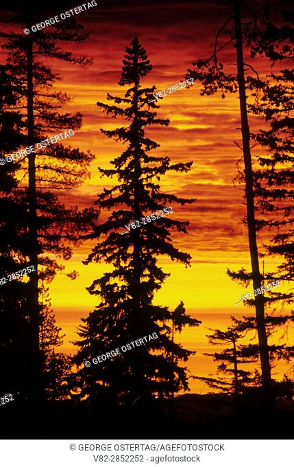 Sunrise at Santiam Pass, Willamette National Forest, Oregon