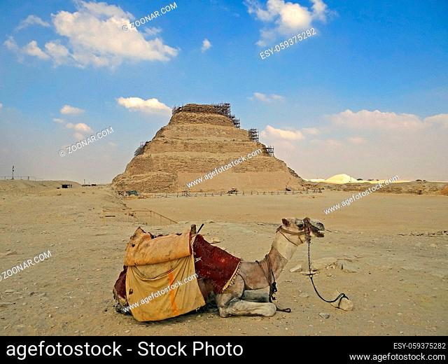 Camel against Dzhoser's pyramid. Photos from a trip
