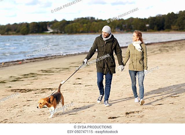 couple with beagle dog walking along autumn beach
