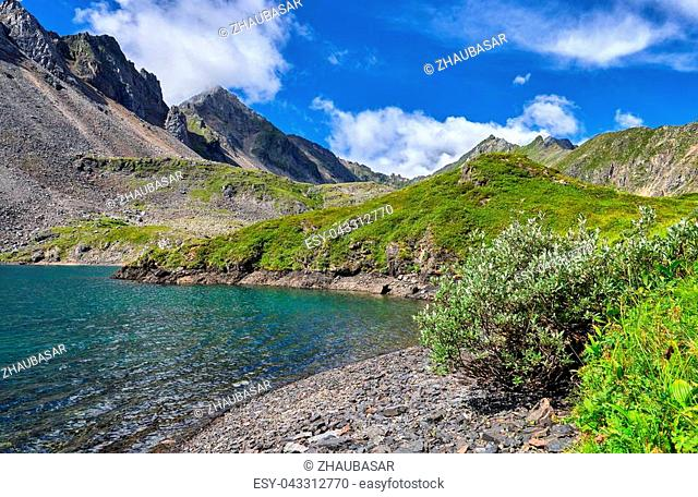 Subshrub grows on fragments of rocks on shore of mountain lake. Eastern Sayan. Russia