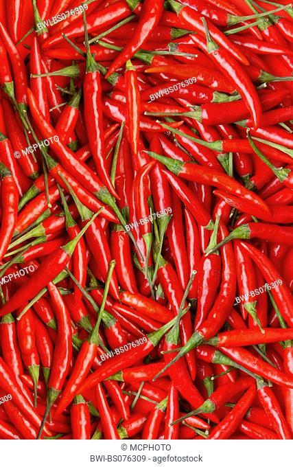 chili pepper, paprika (Capsicum annuum), red chili