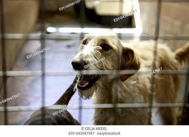 Dog in enclosed kennel, abandoned animals, abuse