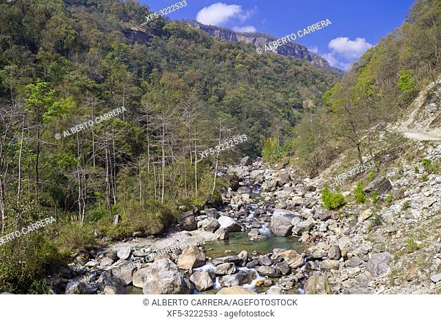 Forest River, Trek to Annapurna Base Camp, Annapurna Conservation Area, Himalaya, Nepal, Asia