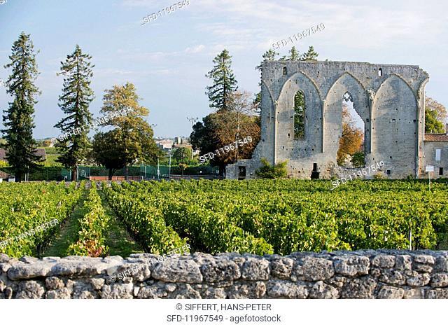 Les Grand murailles, Saint- Emilion, Bordeaux, France