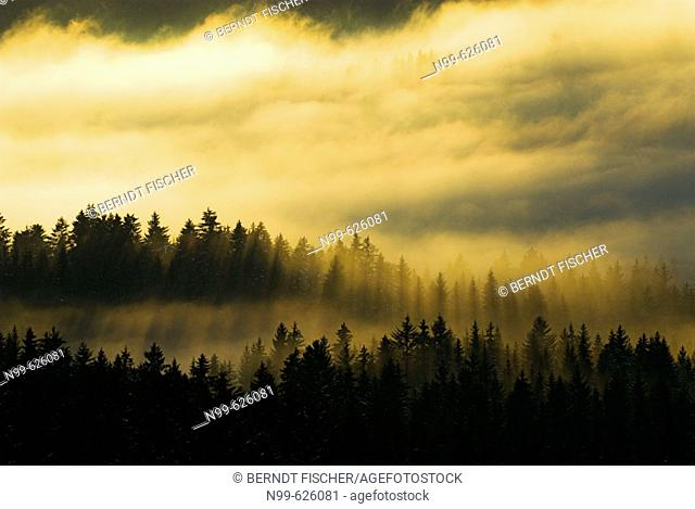 Bavarian Pine Forest, winter, ambiance with clouds and fog, National Park Bayerischer Wald, Germany