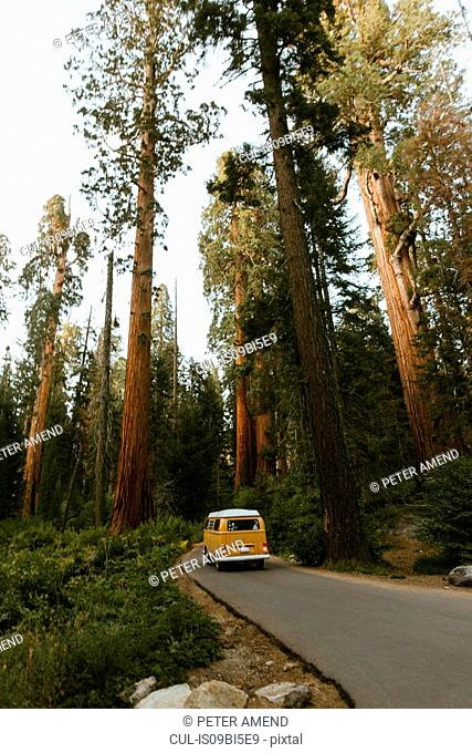 Camper van driving on sequoia tree lined road, Sequoia National Park, California, USA