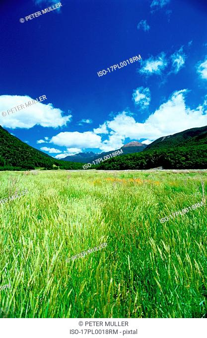 green field and hills