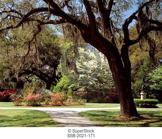 Brookgreen Gardens Murrells Inlet South Carolina USA