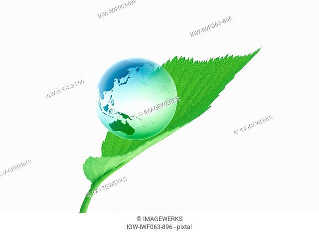 Globe on green leaf against white background