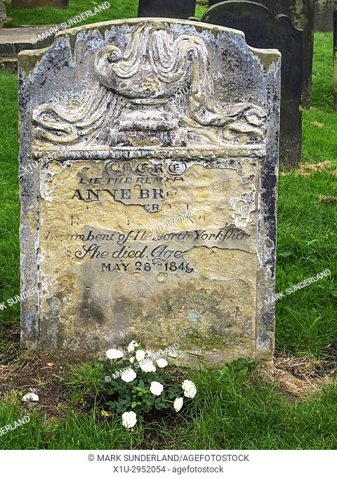 White Roses n Bloom at the Anne Bronte Grave in the Churchyard at St Marys Church Scarborough Yorkshire England