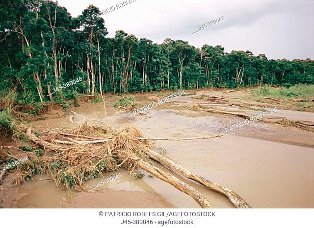 Flooding and forest degradation. New Britain. Papua New Guinea