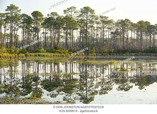 Headquarters Pond, St. Marks NWR, Florida, USA