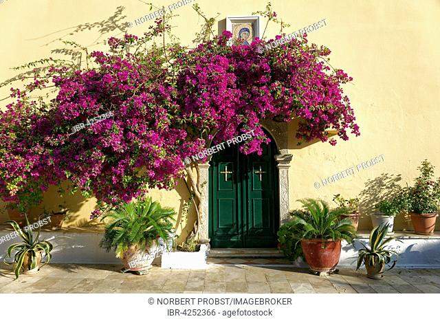 Courtyard door and bougainvillea, bush, monastery of Panagia Theotokos tis Paleokastritsas or Panagia Theotokos, Paleokastritsa, Corfu, Ionian Islands, Greece